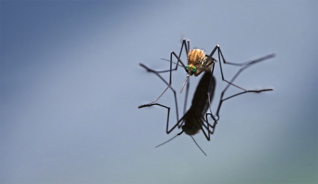 Is your pool ground zero for your neighbourhood's latest mosquito infestation?